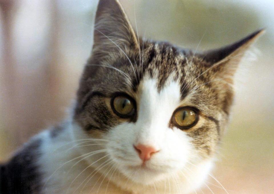 Evcil hayvanların özellikleri evcil hayvanlar hakkında bilgi